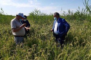 Аграрии Кызылординской области испытывают нехватку воды