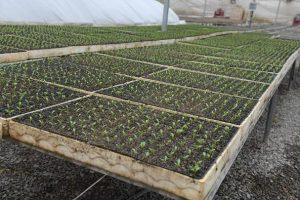 Теплица для выращивания рассады овощей в Шымкенте
