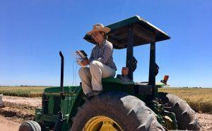 исследование пшеницы