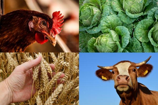 Валовый выпуск продукции сектора сельского хозяйства с начала года составил 503 миллиарда