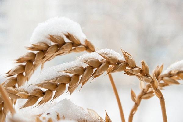 Возможно скоро можно будет выращивать сельхозкультуры зимой