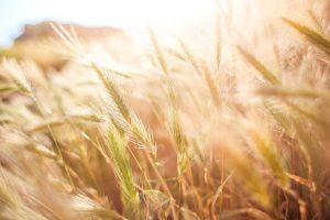 В Беларуси формируется госпрограмма развития аграрного бизнеса