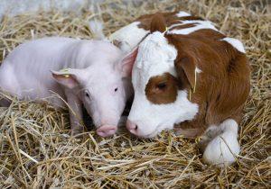 В ВКО наблюдается рост поголовья скота и достаточный запас зерна