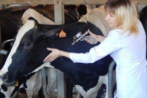 В ВКО работает специальная ветеринарная комиссия