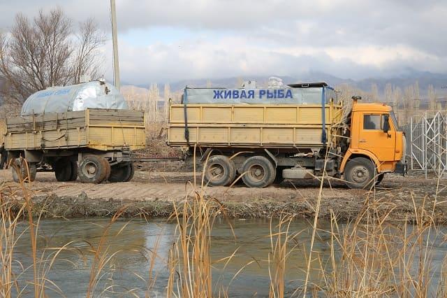 В Жамбылской области успешно развивают товарное рыбоводство