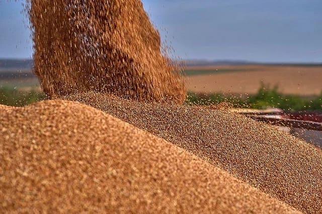 субсидии на семеноводство
