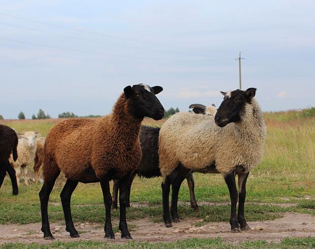экспорт скота из Кыргызстана