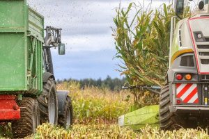 В Панфиловском районе началась уборка кукурузы