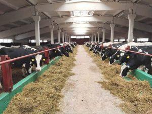 В Рязанскую область завозят животных для строящейся мегафермы
