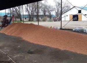 В ТОО «Агропарк Оңтүстік» завершены работы по предпосевной обработке семян