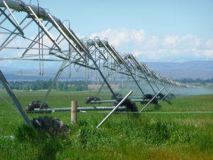 В Туркестанской области внедряют новые технологии сельского хозяйства