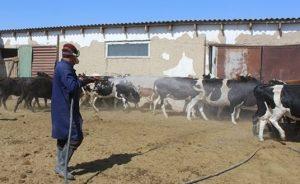 В Туркестанской области началась противоклещевая обработка