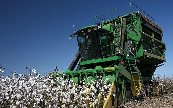 В Туркестанской области началась уборка урожая хлопка