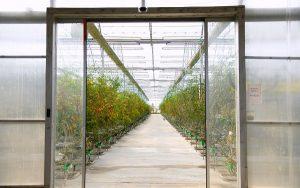 В Шымкенте ведутся работы по запуску 2 агропромышленных зон
