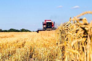 В районе Алтай ВКО рассказали о развитии сельского хозяйства