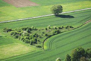 Диверсифицированное сельское хозяйство