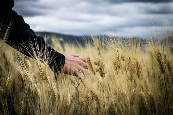ЕЭК утвердила направления аграрной науки для совместной реализации