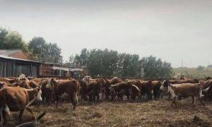 ферма Даулета Жунусова