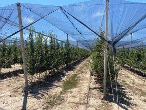 Инвесторы из Турции планируют открыть производство по переработке фруктов