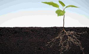 Исследования доказывают важность микробов для выживания и роста растений
