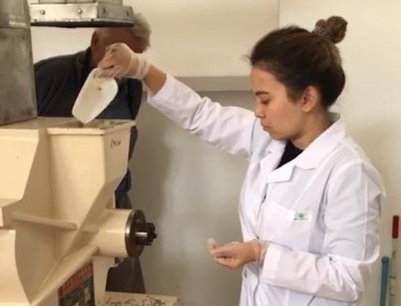 КазНИИППП поделились опытом в использовании новых отечественных сортов тритикале
