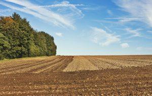 Казахстанские фермеры уже засеяли четверть всей посевной площади