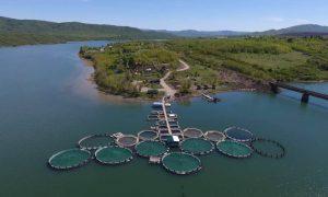 Какие меры для развития рыбоводства предпринимаются в Казахстане