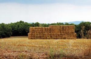 остатки прошлогоднего урожая