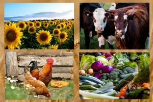 сельское хозяйство РК