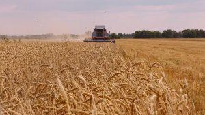 Костанайские аграрии уже не ждут большого урожая
