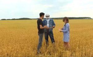 Крестьяне СКО заранее застраховали культуры на полях от засухи