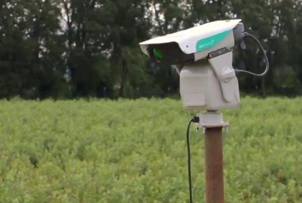 Лазерный отпугиватель диких птиц