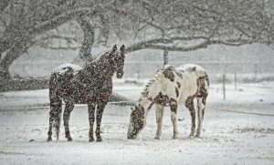 Лошади зимой