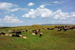 Мактааральцам возмещена компенсация за потерю скота в результате ЧС