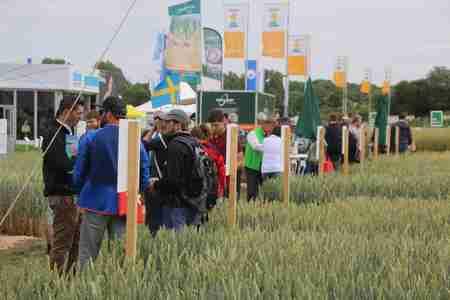 конкурс стратегии выращивания озимой пшеницы