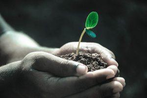 Методы оздоровления почв в каждом регионе индивидуален