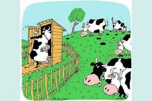 Могут ли коровы содержать свое стойло в чистоте