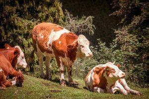 Модели «Умного земледелия» повышение эффективности производства в животноводстве