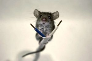 Мышь и проводка