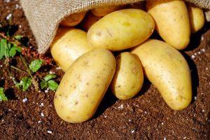 Начат прием заявок на получение квоты на вывоз картофеля семенного на АПРЕЛЬ 2020 года
