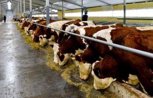 Новая молочная ферма в СКО