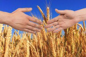 система страхования растениеводства
