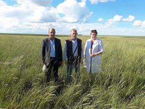 Новая технологию посева обеспечивает полноценную всхожесть семян многолетних трав