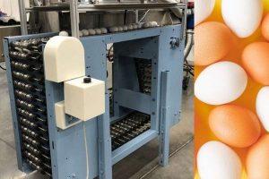 Обработка яиц ультафиолетом