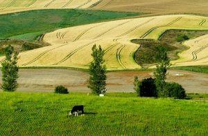 Около 2,5 тысяч фермеров получили помощь государства
