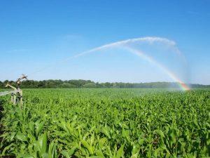 Орошение семенной кукурузы