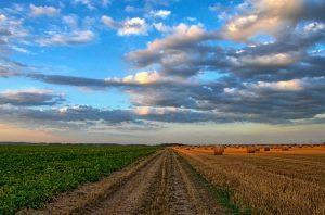 Основные показатели развития сельского хозяйства в ЗКО