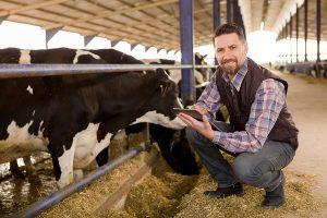 кредитование животноводства