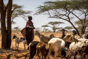 Пастух с козами