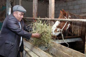 Подсобные хозяйства сельских жителей развивают в Жамбылской области
